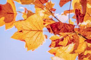 Výhodné jesenné úvery